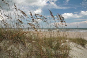Beach with sea oats